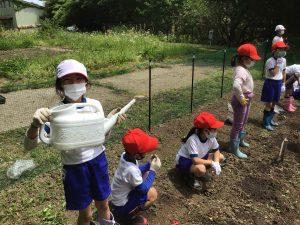 野菜の種や苗を植えたよ~2年生~
